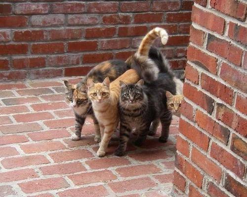 猫ギャング01