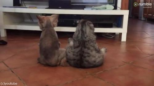 仲良くテレビを観るワンニャン02