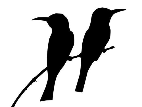 オーストラリアのキャンプで鳥が寄ってくるとき