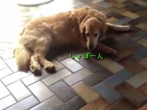 かわいそうな犬00