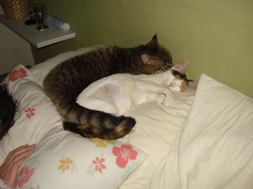妹猫と兄猫01