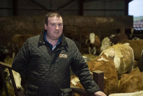 スコットランドの牛小屋に虎の通報06