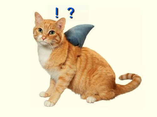 サメ猫00