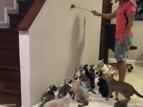 猫じゃらしと猫軍団00