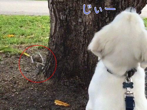 木を見上げる犬「リス、どこ行ったのかなぁ」00