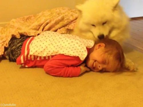 女の子とサモエドの子犬00