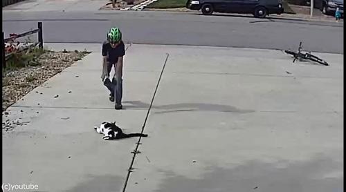 近所の少年は毎日うちの片目の猫を撫でにやってくる02