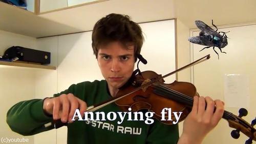 ヴァイオリニストが動物の鳴き声を演奏する06