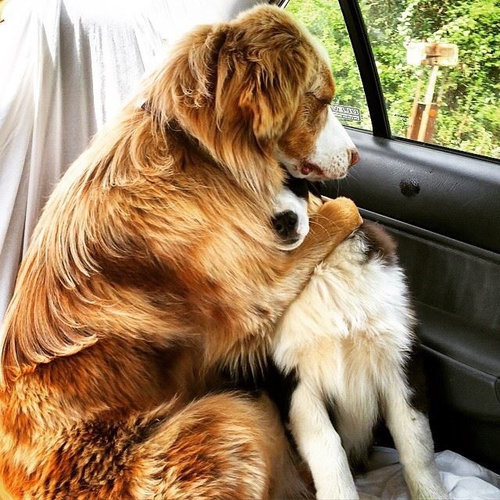 犬や猫が獣医に連れて行かれることを察知したとき01