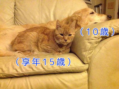 親友の猫を亡くした犬に新しい猫00