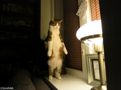 猫のストレッチをいろんな角度から眺めてみた03