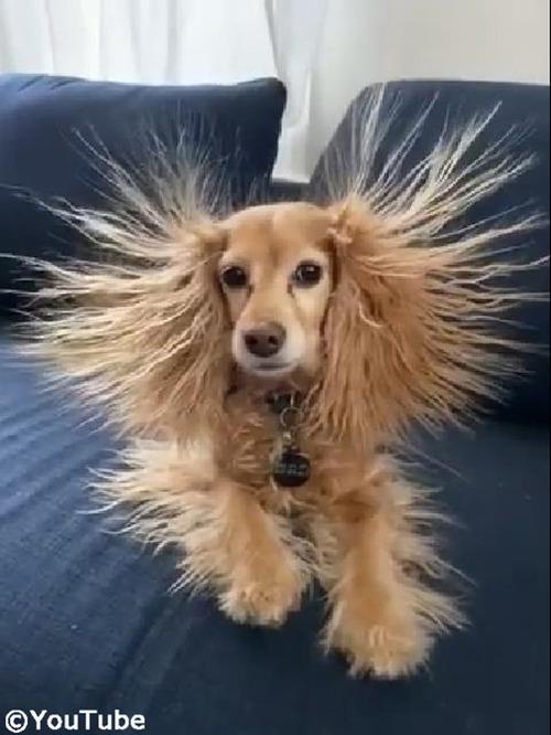 静電気でスゴいヘアスタイルになっちゃった02