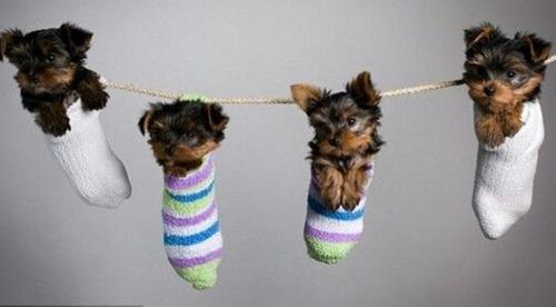 洗濯物として干された子犬たち10