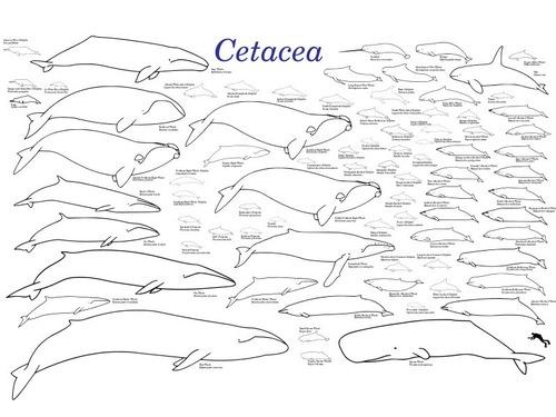 クジラの祖先が4本足だった証拠の化石02