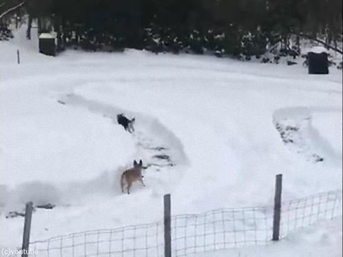 雪で犬のレース場00