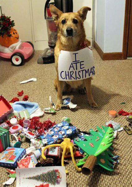 クリスマスとペット23