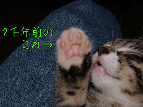 古代ローマの猫の足あと00