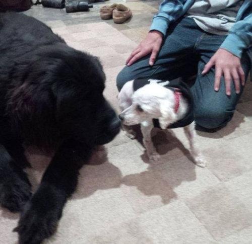 捨て犬の救助09