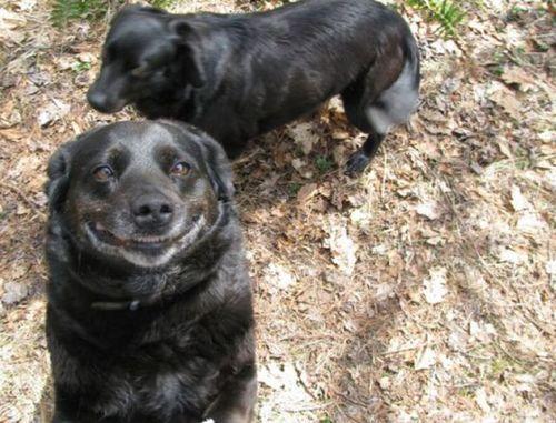 笑う犬09
