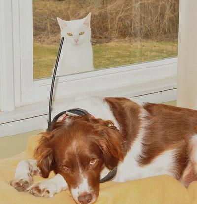 邪魔する犬と猫13