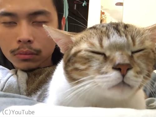 リズム感がありすぎる猫03