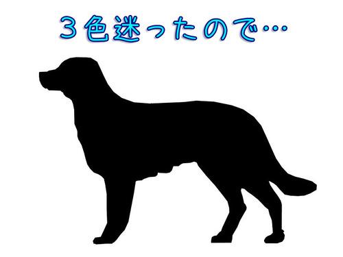 子犬3色00