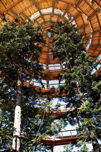 「Tree Top Walk」05