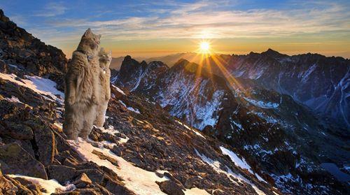 猫が鳥を見るポーズ09