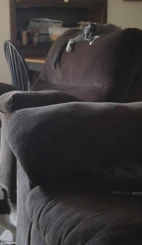 隣のソファーに飛び移ろうとする犬06