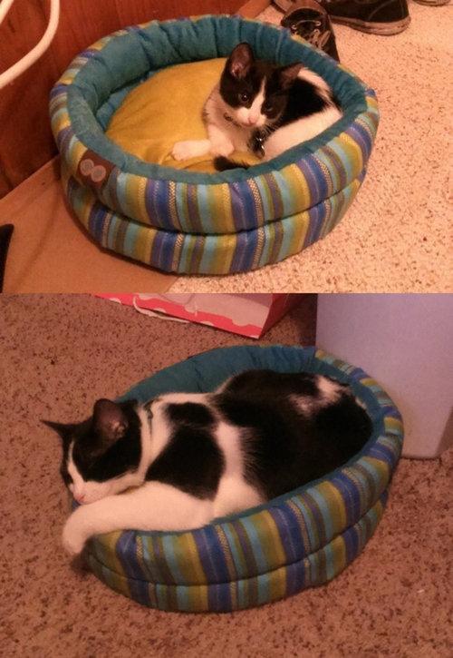 猫とバケツ10