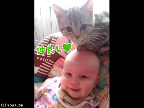 猫と赤ちゃん00