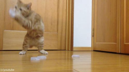 猫ゴールキーパー05