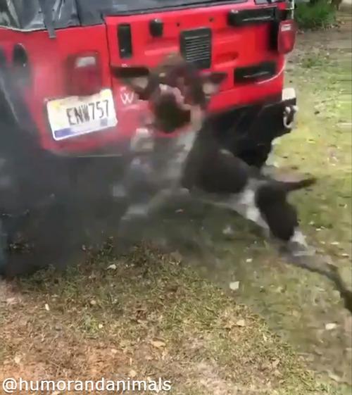 洗車を邪魔する無邪気なワンコ02