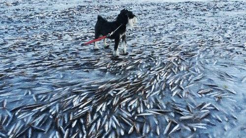 魚の群れが凍り付く01