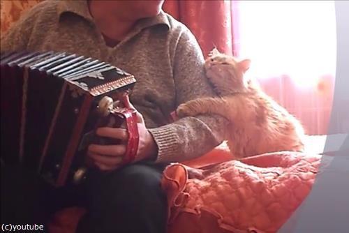 アコーディオンと猫02