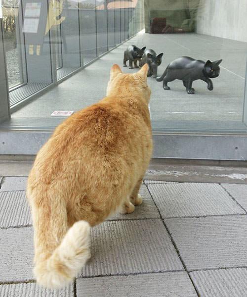 尾道市立美術館と猫01
