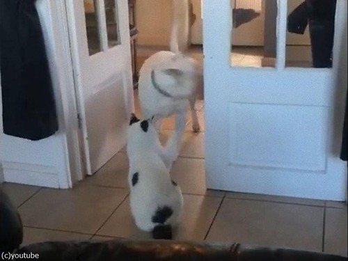 猫が怖くて通れない犬02