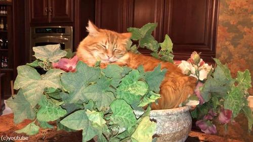 猫…なぜそこで昼寝?01
