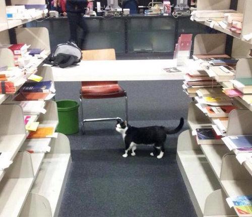 ドイツの大学で暮らす猫05