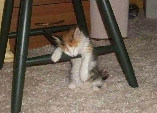 眠る猫13