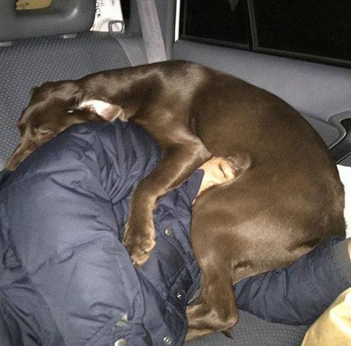 犬を飼うべき理由05