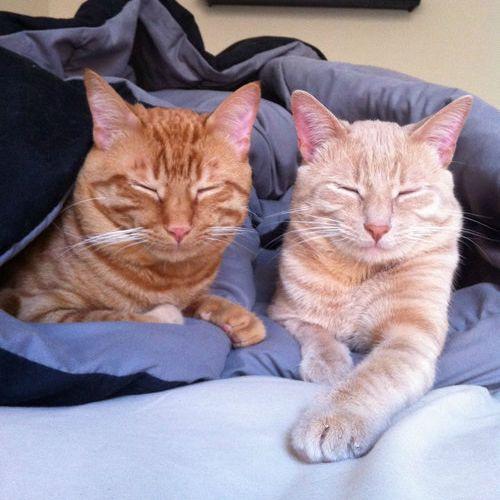 手をつないで寝る子猫たち08