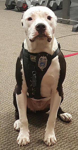 火災から救出された子犬、消防士に09