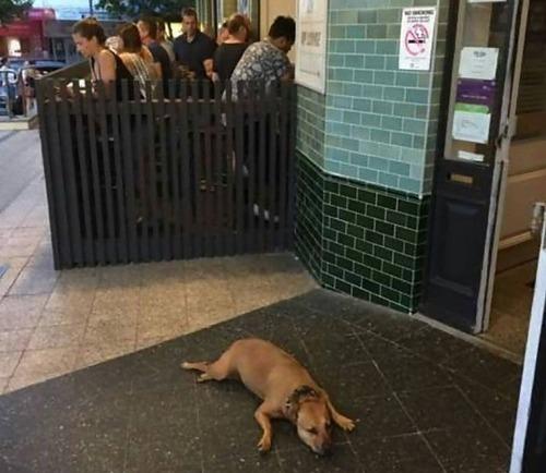 飼い主を待つ犬たち07