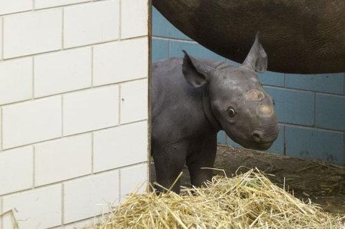 動物の赤ちゃん10