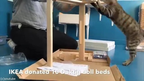 猫にピッタリのベッドを寄付した結果02