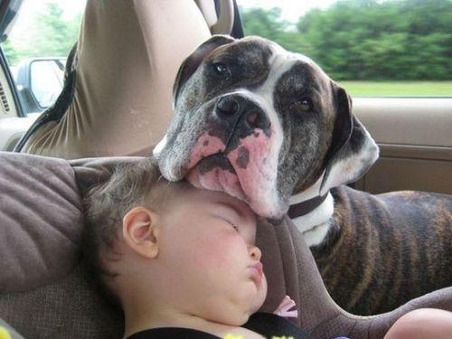 ペットと赤ちゃん06
