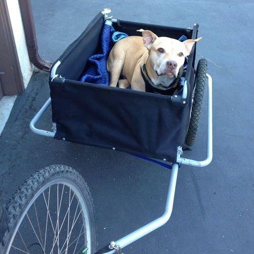 年老いた犬を手押し車に乗せた08