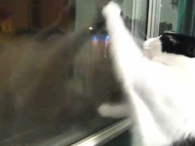 曇りガラスをフキフキしまくってくれる猫