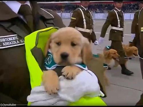 警察権の子犬がチリのパレードでお披露目03